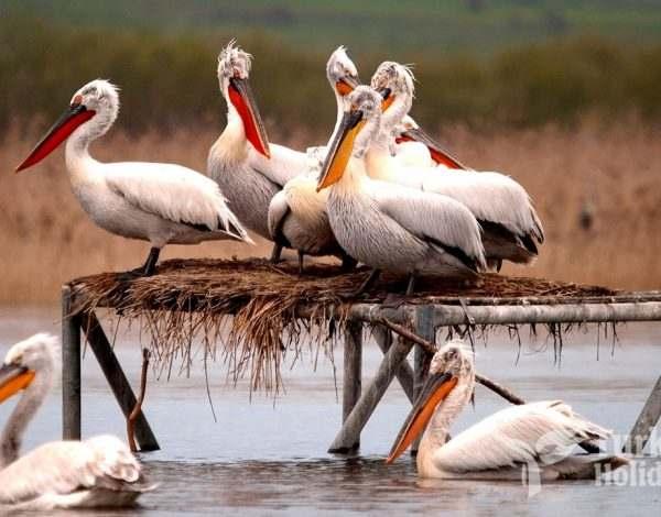 Manyas Bird Paradise National Park